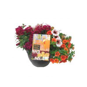 flores-combinadas